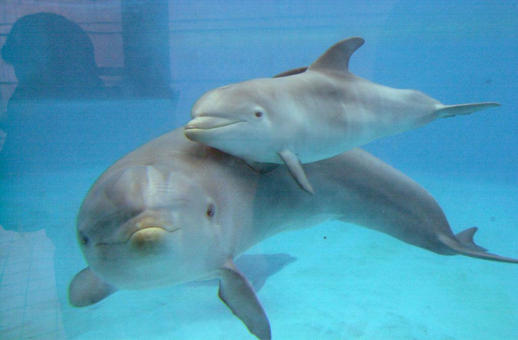 Delfinarios: ¿Son cárceles acuáticas?