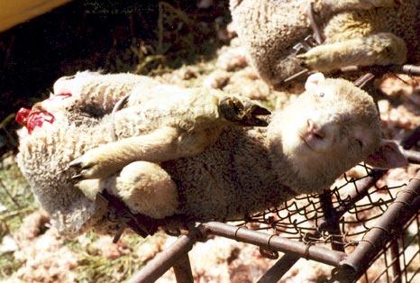 La lana ¿Qué tiene de malo? 3
