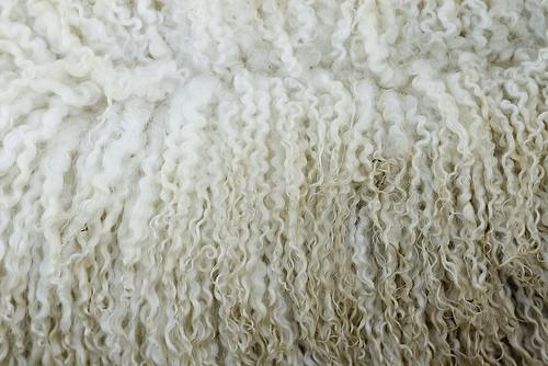 lana de animal