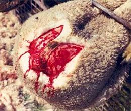 La lana ¿Qué tiene de malo? 1
