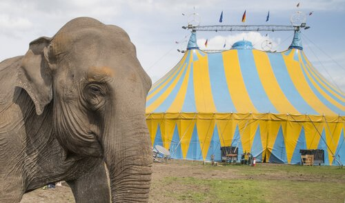 Maltrato de elefantes en circo