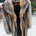 Abrigo de zorro de virginia 2