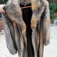 Abrigo de zorro de virginia